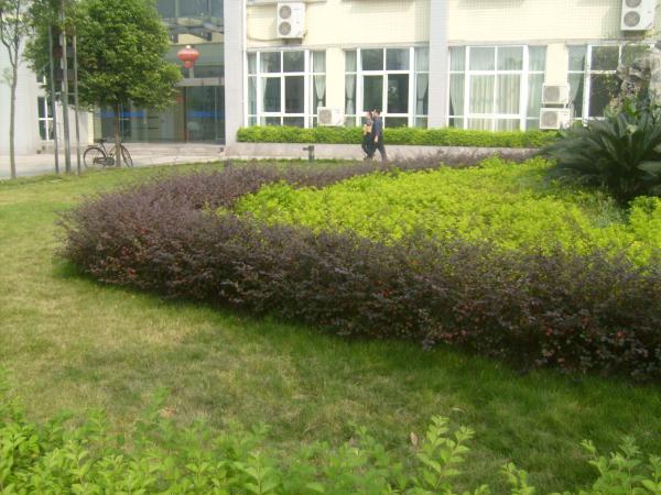 綠化栽培、修剪、養護有序,扮靚環境
